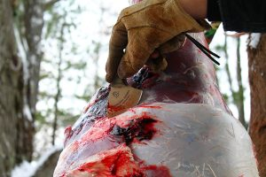 Backwoods Skinner skinning a whitetail deer in Michigan