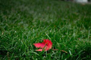 Standout Leaf